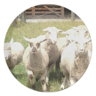 Sheep Stampede Party Plate