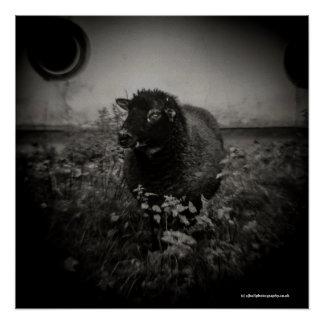 Sheep - Toy Camera Photograph Art Poster