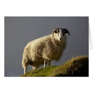 Sheep, Trotternish Peninsula, Isle of Skye, Card