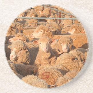 Sheep waiting to be shorn coaster