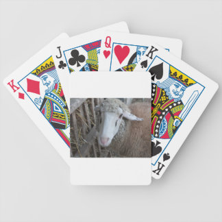 Sheep with hay bicycle playing cards