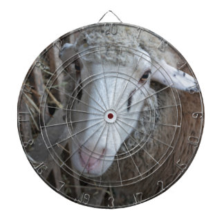 Sheep with hay dartboard