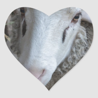 Sheep with hay heart sticker