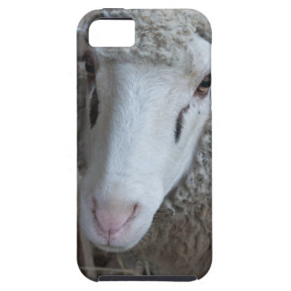 Sheep with hay iPhone 5 case