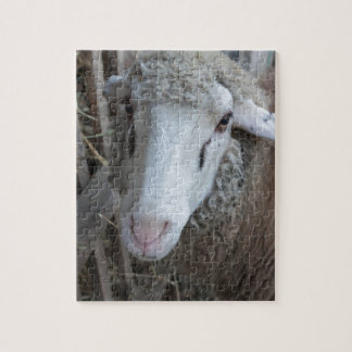 Sheep with hay jigsaw puzzle