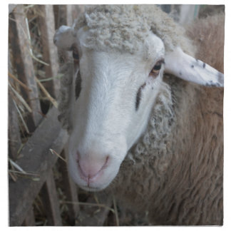 Sheep with hay napkin