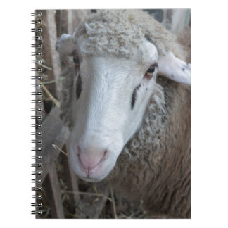 Sheep with hay notebook