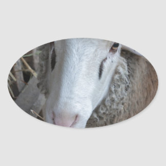Sheep with hay oval sticker