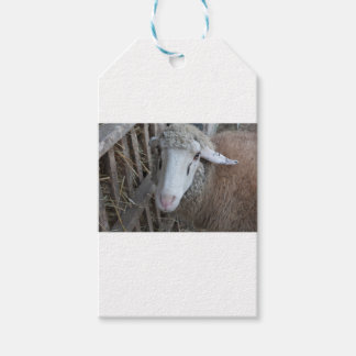 Sheep with hay pack of gift tags