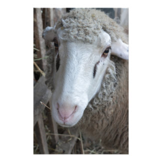 Sheep with hay stationery