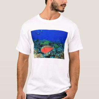 Sheephead Parrotfish Scarus T-Shirt