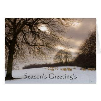 Sheeps Card