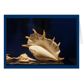Shell Collection Card