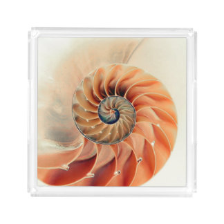Shell Of Life Acrylic Tray