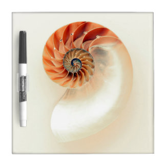 Shell Of Life Dry Erase Board