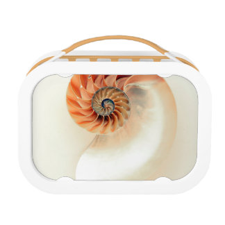 Shell Of Life Lunch Box