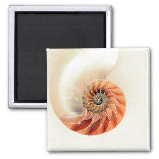 Shell Of Life Magnet
