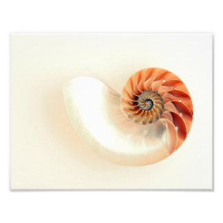 Shell Of Life Photo Print
