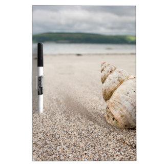 Shell_on_Lady_Bay_Beach Dry-Erase Whiteboard