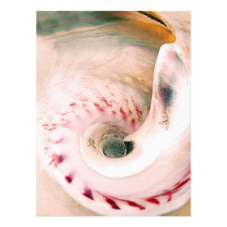 Shell Portrait Photo Print