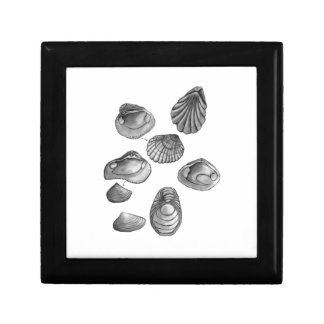 Shell sketch gift box