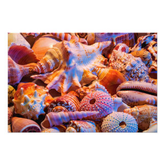 Shells 1 photo print