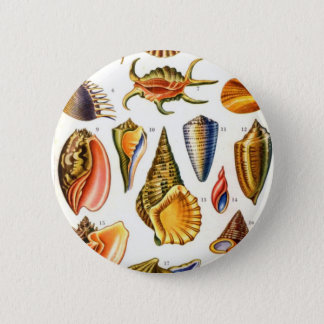 Shells 2 Inch Round Button