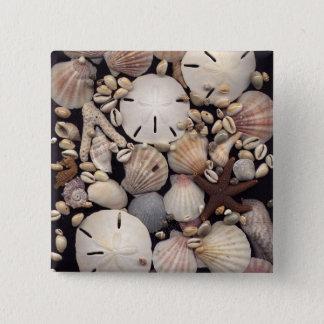 Shells 2 Inch Square Button