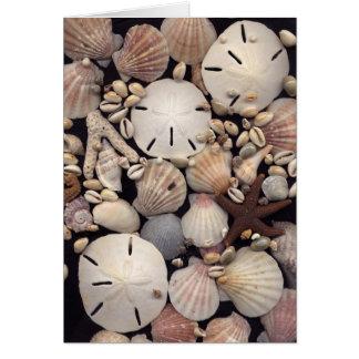 Shells Card