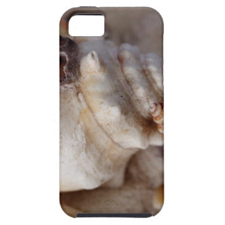 Shells Case For The iPhone 5
