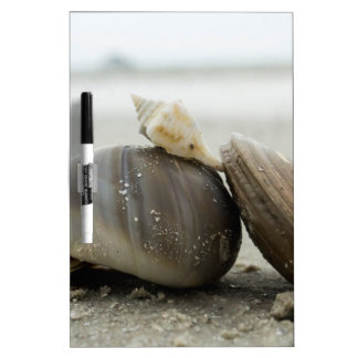 Shells Dry-Erase Whiteboards