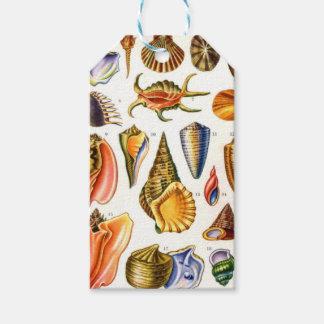 Shells Gift Tags