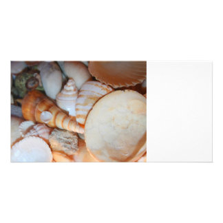 shells image from florida many seashells photo greeting card
