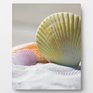 SHELLS IN THE SAND PLAQUE