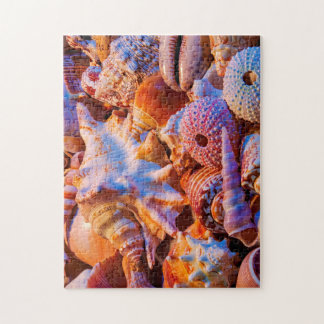 Shells Jigsaw Puzzle