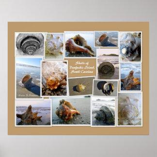 Shells of Daufuskie Island, SC Poster