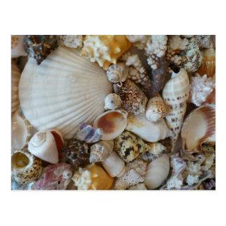 Shells Of Sanibel Postcard