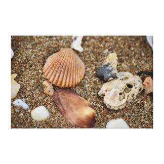 SHELLS ON BEACH QUEENSLAND AUSTRALIA CANVAS PRINT