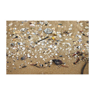 SHELLS ON BEACH QUEENSLAND AUSTRALIA CANVAS PRINT