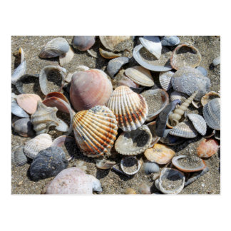 shells on the beach postcard