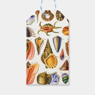 Shells Pack Of Gift Tags