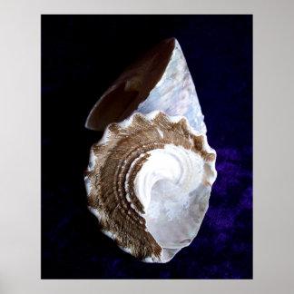"""Shells"" print"