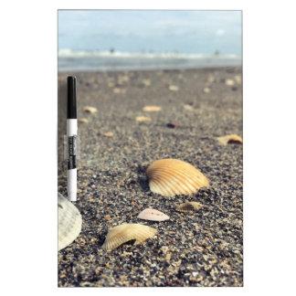 shells, shells, shells dry erase board