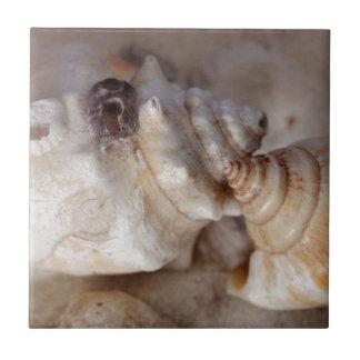 Shells Tile
