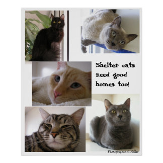 Shelter cats need good homes too poster