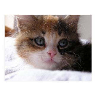 Shelter Kitten Postcard