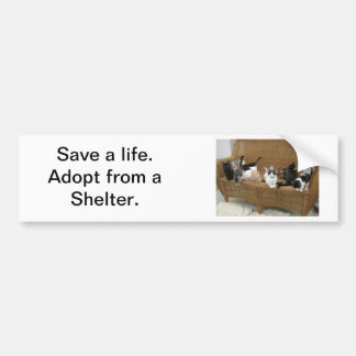 Shelter Kittens Bumper Sticker