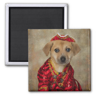 Shelter Pets Project - Ginger Magnet