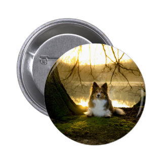 sheltie 2 inch round button