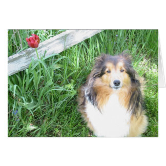 Sheltie and Tulip Note Card